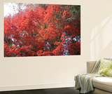 Red Tree Wall Mural by  NaxArt