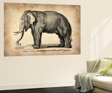 Vintage Elephant Wall Mural by  NaxArt