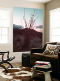 Desert Plants And Sunset Wall Mural by  NaxArt