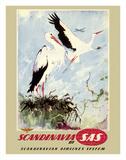 Scandinavia - White Storks - SAS Scandinavian Airlines System Impression giclée par Otto Nielsen