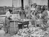 Weighing Up the Catch, Gloucester, Mass. Photo
