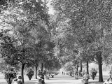 A Walk in Lincoln Park, Chicago Photo