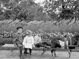 A Goat Team, Highland Park, Rochester, N.Y. Foto