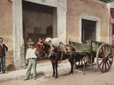 A Mule Cart in Havana Led by a Vendor Prints by William Henry Jackson