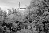 Rough Wooden Crosses and Peeling Signs Bearing Bible Scripture Posters by Carol Highsmith