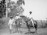 Cane Cutters on a Cuban Sugar Plantation Photo