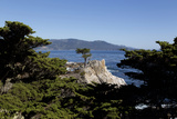 Lone Cypress on the 17-Mile Drive, Monterey Peninsula, California Posters by Carol Highsmith