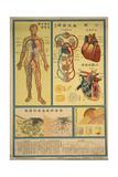 Blood Circulation and Coagulation Prints
