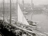 Unloading Fish Att Wharf, Boston, Mass. Photo