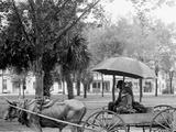 A Bovinmobile, Savannah, Ga. Photo
