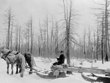 Logging in Michigan, the Sled Photo