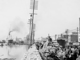 Mule Teams on the Levee, New Orleans, La. Photo