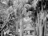 Alligator Joes Bungalow, Palm Beach, Fla. Foto