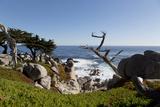 Lone Cypress on the 17-Mile Drive, Monterey Peninsula, California Prints by Carol Highsmith