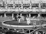 Circus Rings, Luna Park, Coney Island, N.Y. Photo