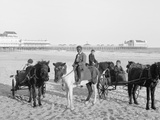 Ponies on the Beach, Atlantic City, N.J. Photo
