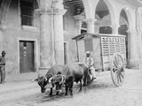 Meat Wagon, Havana, Cuba Photo