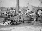 Handling a Cargo from the Fishing Banks, Gloucester, Mass. Photo