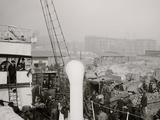 Unloading a Banana Steamer, Baltimore, Md. Photo