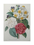 Bouqet of Camellias, Narcisses and Pansies Poster by Pierre-Joseph Redoute