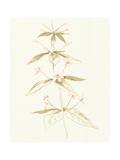 Flowers on White III Prints by Wild Apple Portfolio