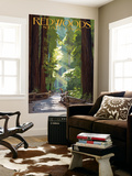 Redwoods State Park - Pathway in Trees Wall Mural by  Lantern Press