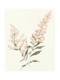 Flowers on White I Prints by Wild Apple Portfolio