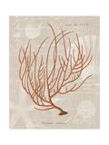 Gorgonia Miniacea on Linen Posters by Wild Apple Portfolio
