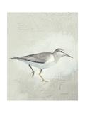 Sea Birds III Art by Kathrine Lovell