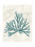 Pacific Sea Mosses IV Posters by Wild Apple Portfolio