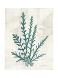 Pacific Sea Mosses III Prints by Wild Apple Portfolio
