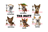 The Mutt Prints by Jim Baldwin