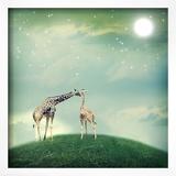 Giraffes In Friendship Or Love Concept Image Print by  Melpomene