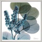 Lilly Of Eucalyptus 高品質プリント : アルバート・クーツィール