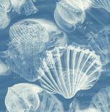 Shell Blueprint 1 Kunst af John Butler
