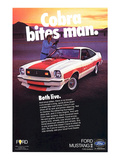 1978 Mustang - Cobra Bites Man Prints