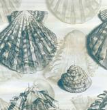 Shell Engraving 2 Poster af John Butler