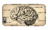 Vintage Brain Map Anatomy iPhone 6 Plus Case by  NaxArt