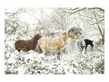 3 Horses & Snow Covered Trees Art
