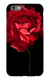 Red Ranunculus iPhone 6 Plus Case by Magda Indigo