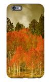 Portrait of Aspens in Autumn iPhone 6 Plus Case by Vincent James