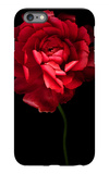 Red Ranunculus iPhone 6s Plus Case by Magda Indigo
