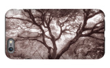 Old Oak Tree in the Oakland Hills iPhone 6 Plus Case by Vincent James