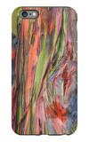 Rainbow Eucalyptus Detail, Kauai iPhone 6s Plus Case by Vincent James