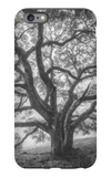 Wild Oak Tree in Black and White Portait, Petaluma, California iPhone 6s Plus Case by Vincent James