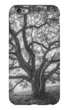 Wild Oak Tree in Black and White Portait, Petaluma, California iPhone 6 Plus Case by Vincent James