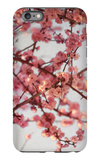 Cherry Blossoms I iPhone 6s Plus Case by Susan Bryant