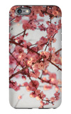 Cherry Blossoms I iPhone 6 Plus Case by Susan Bryant