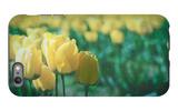 Yellow Tulip Field iPhone 6s Plus Case