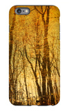 Tree Reflections iPhone 6s Plus Case by Irene Suchocki